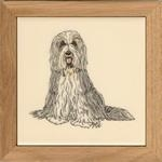 Bearded Collie (SN)