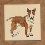 Bull Terrier Red/White