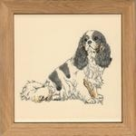 Cavalier King Charles Spaniel Tri-colour