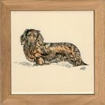Dachshund- Long-Haired Ruby