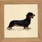 Dachshund- Smooth Black-Tan