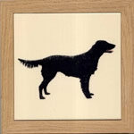 Flat Coat Retriever 2
