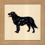 Flat Coat Retriever 3