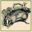 GB Badger