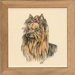 Yorkshire Terrier Head